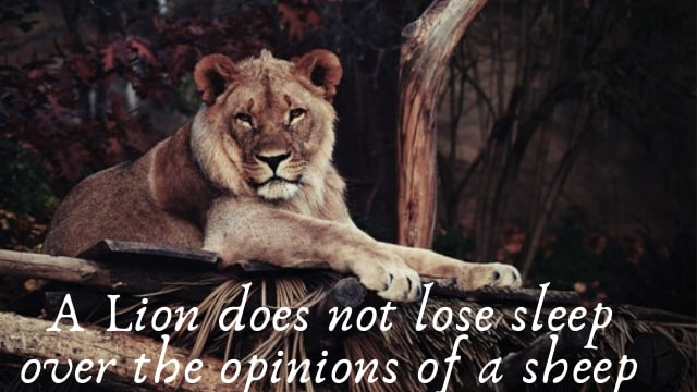 lion quotes and sayings