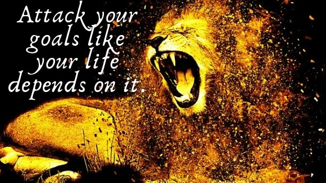 lion loyalty quotes