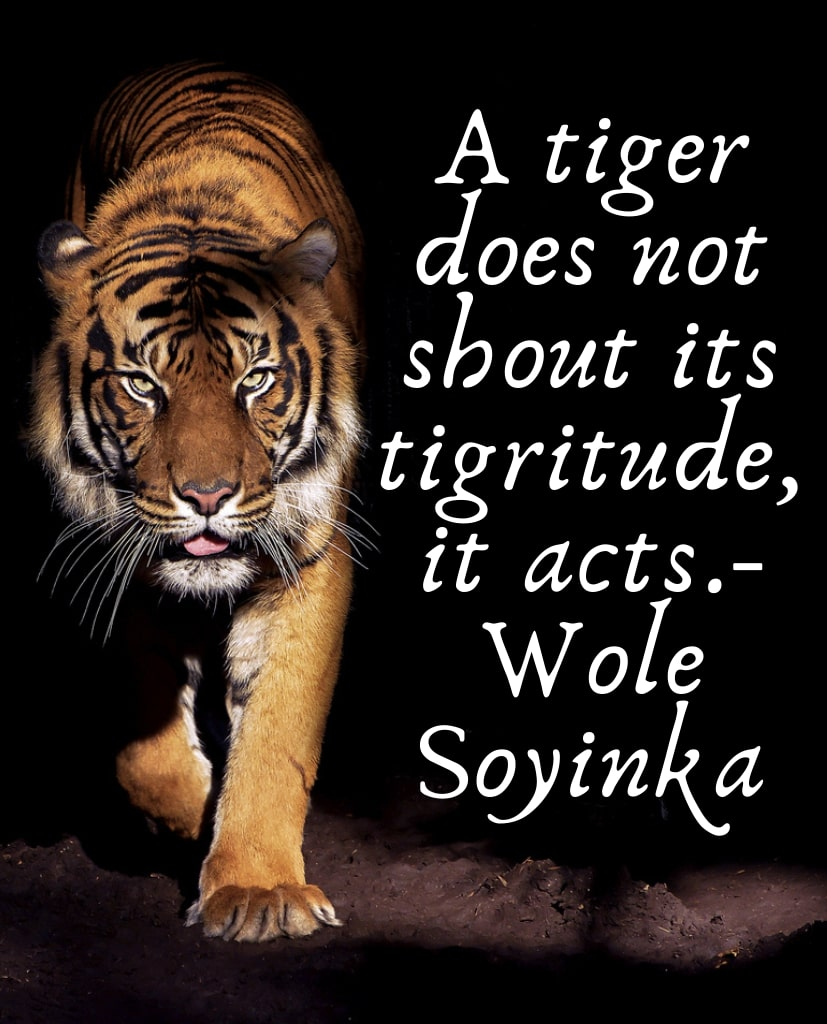 Tiger Quotes - Save Tiger quotes - Tiger images - Photo - Wellpaper