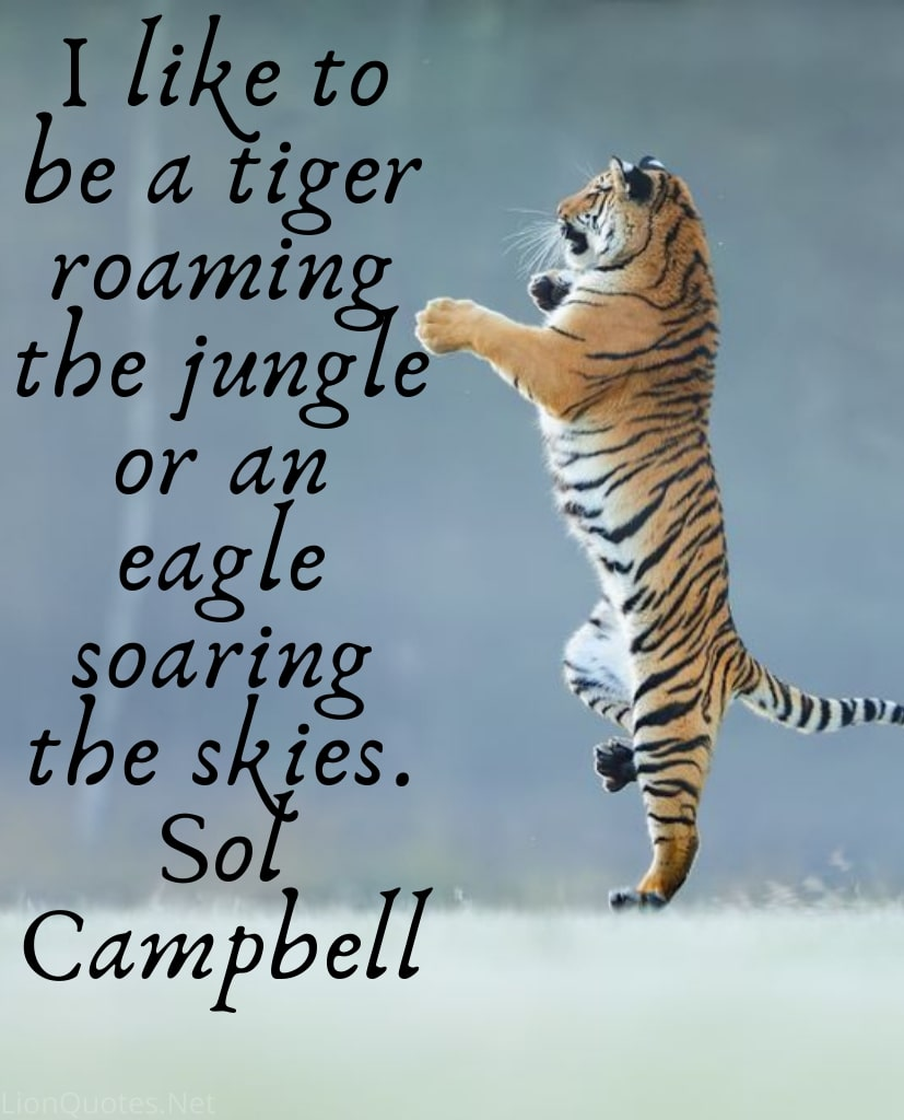 Tiger images with quotes