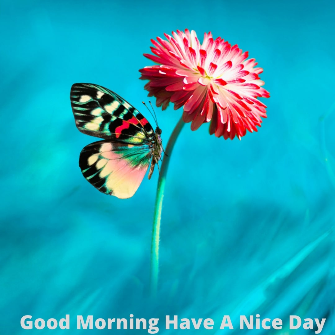 Good Morning Have A Nice Day - Images - wallpapers - Flowers