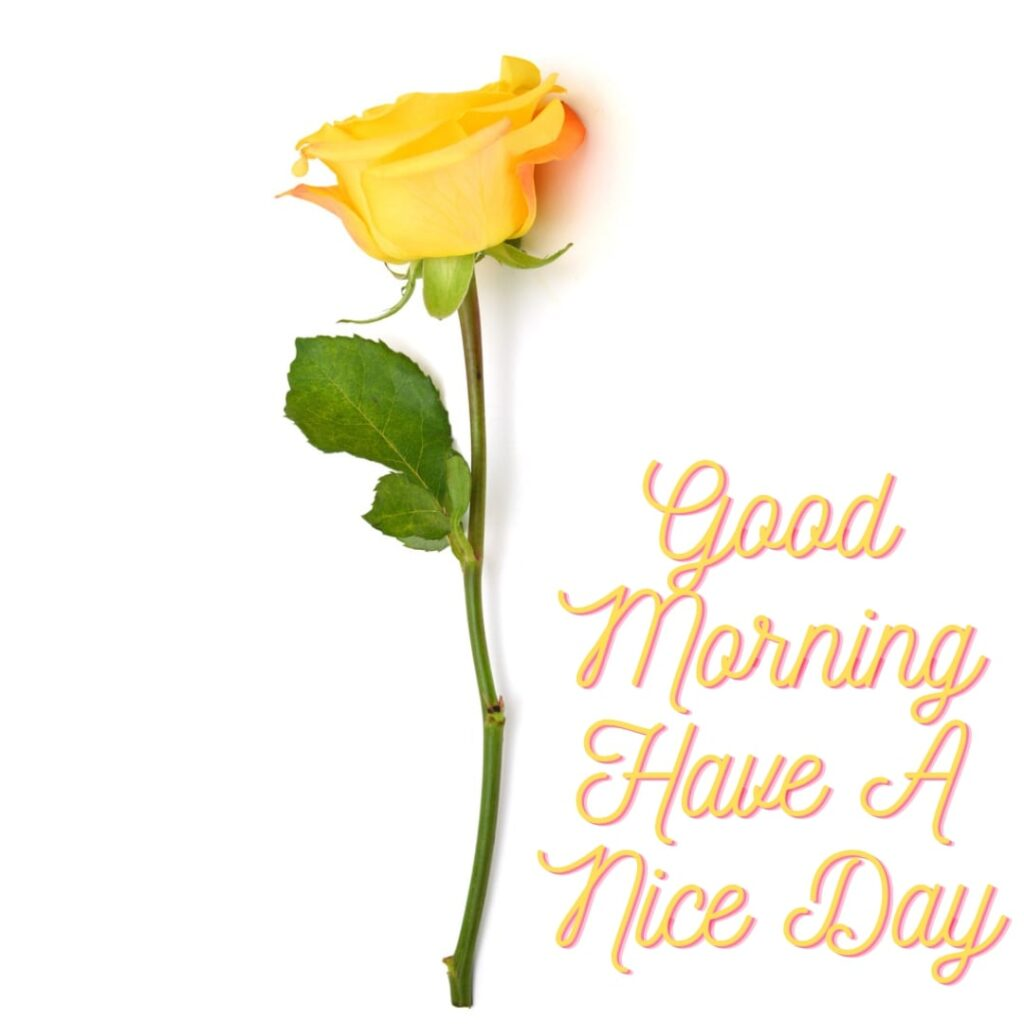 Have A Nice Day Good Morning Image