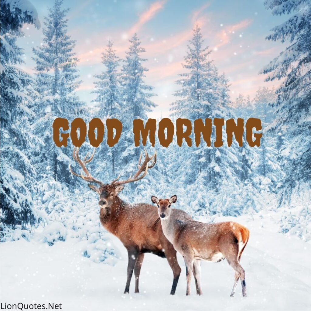 good morning images nature
